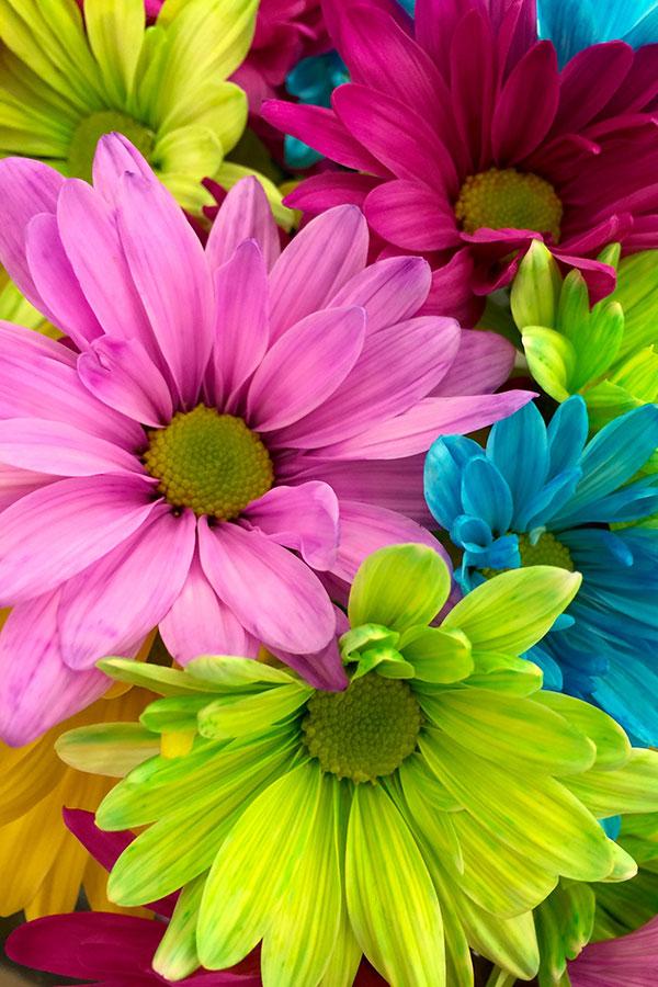 Ambiente floral